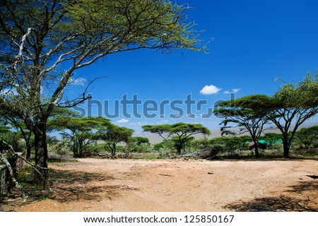 Savanna landscape, acacia trees in Africa, Serengeti, Tanzania. - stock photo