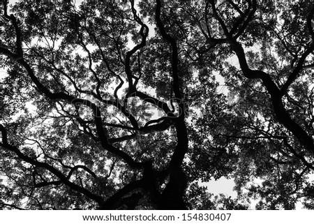 Savannah Georgia Live Oak trees in a square - stock photo