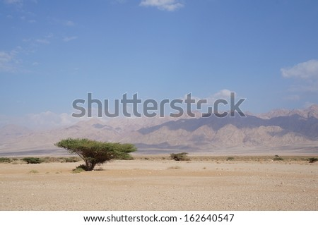 Savannah landscape - stock photo