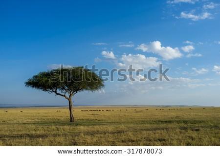Savannah landscape in the Masai Mara National Park, Kenya, Africa - stock photo