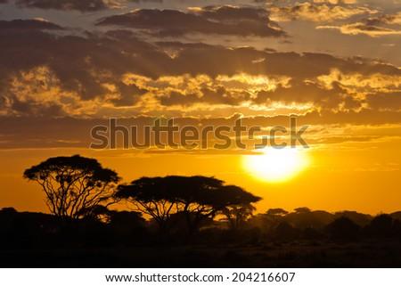 Savannah sunset  - stock photo