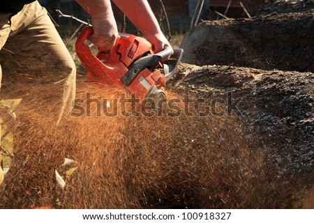 Sawdust flies as a man cuts a fallen tree into logs. - stock photo