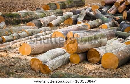 Sawed tree - stock photo