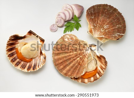 Scallop and onion sliced on background - stock photo