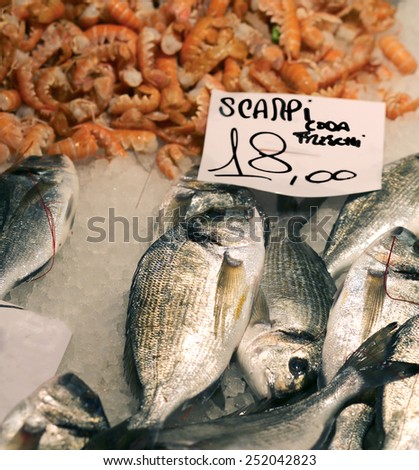 scampi and gilthead bream for sale in fish market - stock photo