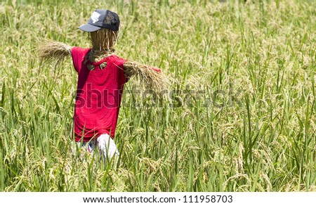 Scarecrow - stock photo