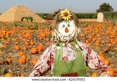 Scarecrow in autumn pumpkin field - stock photo
