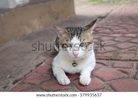 Scared cat - stock photo