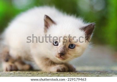 Scared kitten in the garden taking the attack position with selective focus and blurred background - stock photo