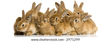 Scaredgroup of bunnies in front of a white background - stock photo