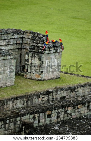 Scarlet Macaw at Copan, the archeological site of Mayan civilization, Honduras - stock photo