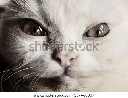 Scary cat  - stock photo