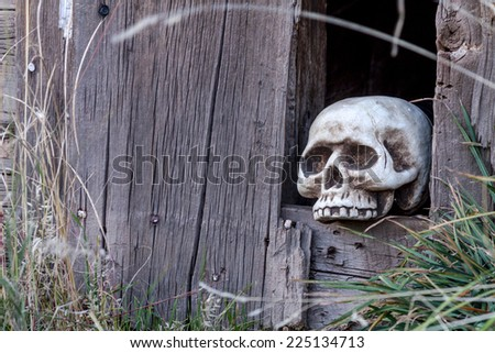 Scary Halloween skull in hole in old abandoned wood building - stock photo