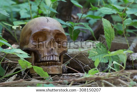 Scary human skull laying in the woods   - stock photo