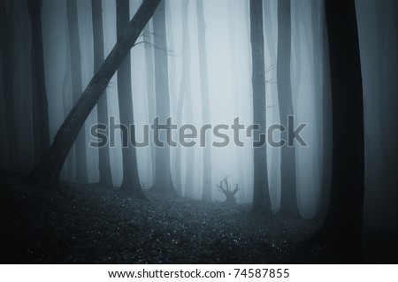 scary scene from a dark cold forest with blue fog - stock photo