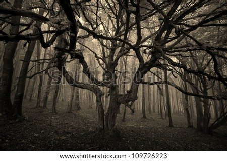 scary tree in forest sepia - stock photo