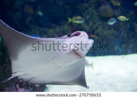 scate - stock photo