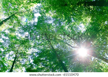 Scene Trees Forest - stock photo