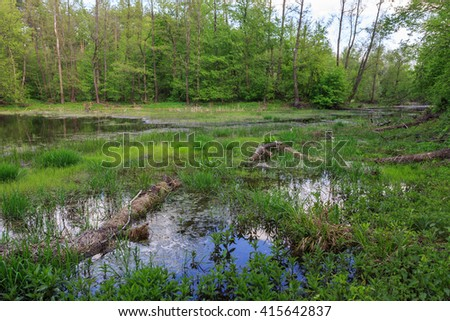 scene with bog in green forest - stock photo