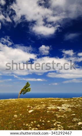 Scenery summer landscape - lone pine grows on the plateau of AI-Petri mountain, Crimea and picturesque cloudy sky - stock photo
