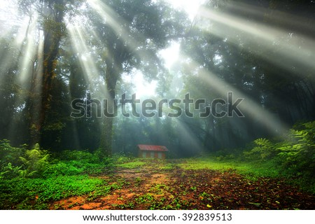 Scenery, warm in the forest with the sun rays and refreshing beautiful of fog and trees. - stock photo