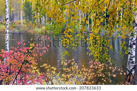 Scenic autumn landscape colorful foliage in the forest near the river on a cloudy day - stock photo