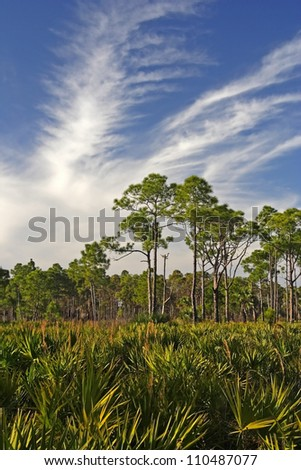 Scenic Florida landscape in DuPuis Management Area - stock photo