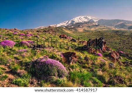 Scenic green meadow with flowers and volcano Damavand in the background, highest peak in Iran - stock photo