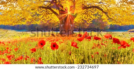 Scenic landscape with poppies flowers and trees with yellow leaves wits sun`s glow - stock photo