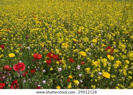 scenic multicolored flowering meadow for background - stock photo