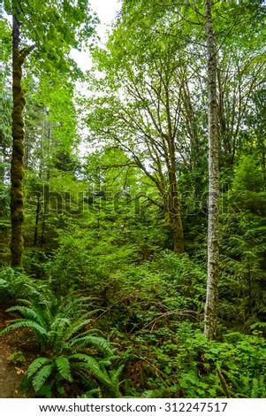 scenic on pathway to beautiful Madison falls in olympic national park,Wa,Usa - stock photo