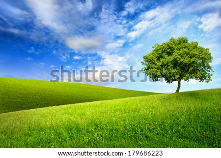 Scenic paradise with a single tree on top of a green hill, blue sky and white clouds and another hilly meadow in the background - stock photo
