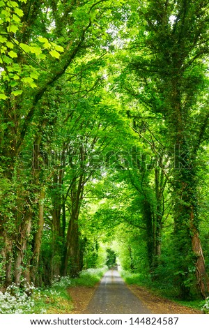 Scenic road through green forest in England - stock photo