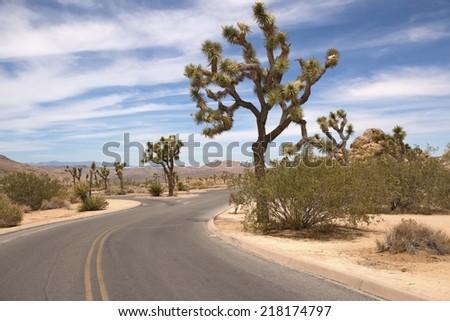 Scenic road through Joshua Tree National Park, California, USA - stock photo