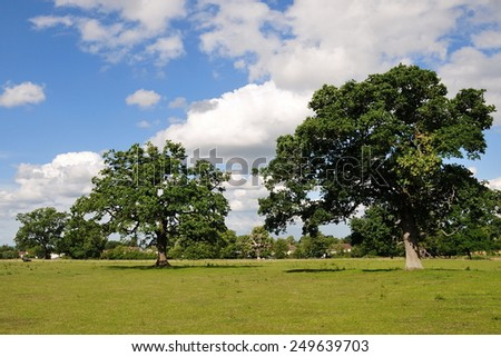 Scenic Summertime View of a Oak Trees Standing in a Beautiful Green Field with a Blue Cloudy Sky Above - stock photo