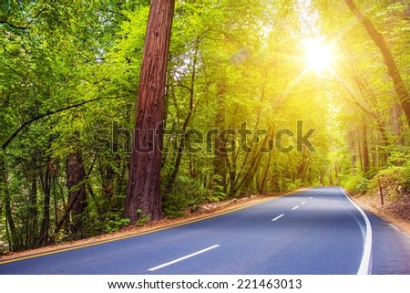 Scenic Sunny Forest Road. Summer Trip Through Scenic Green Forest.  - stock photo