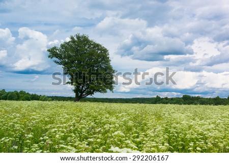 Scenic View Calm Solitude  - stock photo