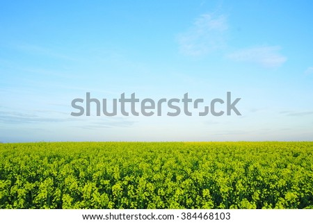 Scenic View of a Field of Crops Growing under a Beautiful Blue Sky - stock photo