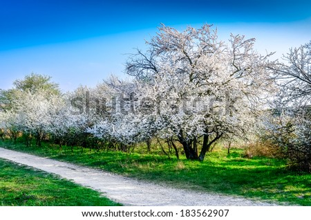 Scenic view of beautiful blooming spring trees and a road - stock photo