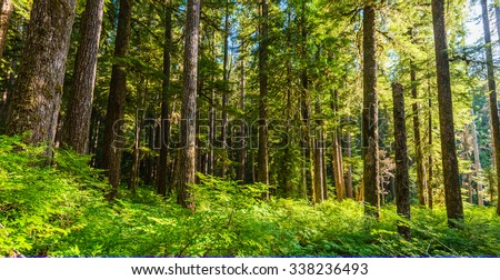 scenic view of beautiful ever green forest in mt Olympic National park,Washington,USA. WA aka evergreen state. - stock photo