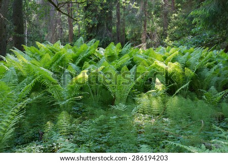 Scenic view of forest landscape - stock photo