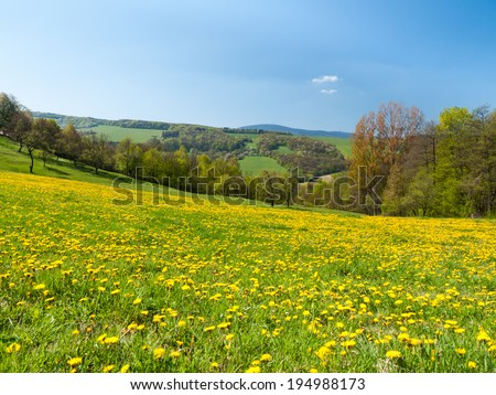 Scenic view of rural landscape with blossoming field - stock photo
