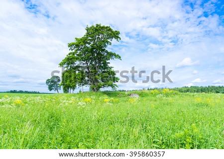 Scenic View Vibrant Springtime  - stock photo