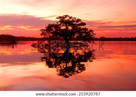 Scenic view with a tree forming perfect circle with his shadow on Laguna Grande, Cuyabeno National Park , Ecuador - stock photo