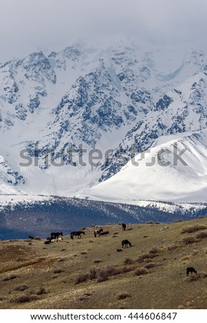 Scenic view with the beautiful mountains with snow and glaciers, and a herd of horses grazing on a hillside with sparse vegetation - stock photo