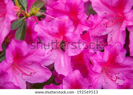 Scenic watercolor background, floral composition with violet flowers - stock photo