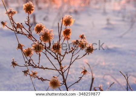Scenic winter abstract background of grass in hoarfrost on snow background in bright sunset light - stock photo