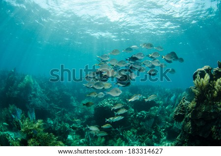 Scenics from the coral reefs of the mesoamerican barrier. Mayan Riviera, Mexican Caribbean. - stock photo