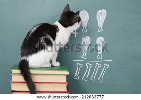 School idea, joke about a educated cat studying arithmetic - stock photo