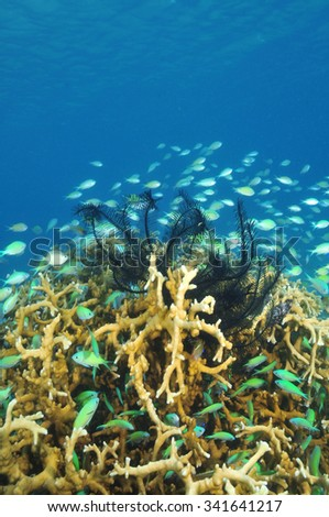 School of coral fish and black feather stars around hard coral block. - stock photo